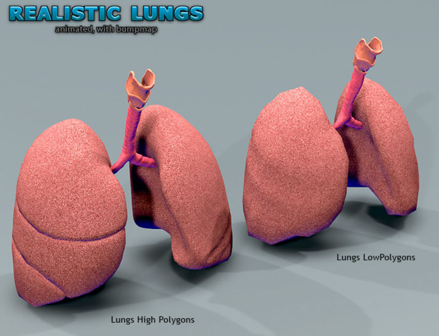 Realistic Lungs Animated royalty-free 3d model - Preview no. 9