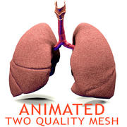 Realistic Lungs Animated 3d model