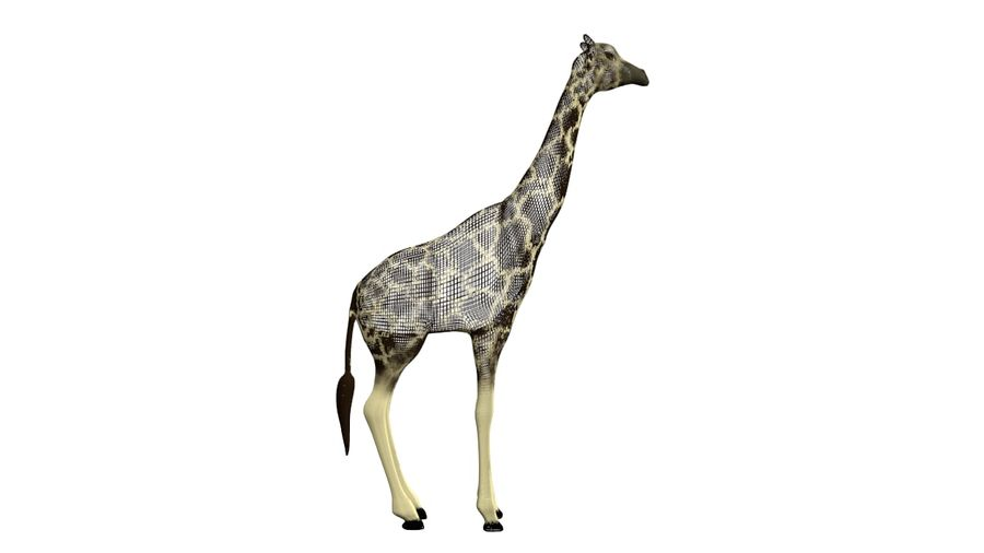 Giraffe Lowpoly royalty-free 3d model - Preview no. 7