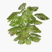Monstera Type 3 Low Poly 3d model