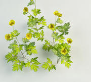 meadow buttercup Ranunculus acris 3d model