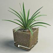 aloe in glass pot 3d model