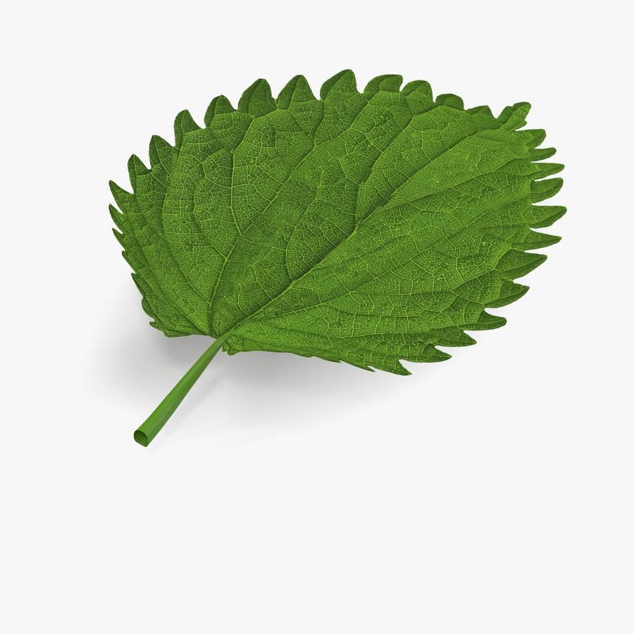 Crenate Leaf Modèle 3D royalty-free 3d model - Preview no. 3