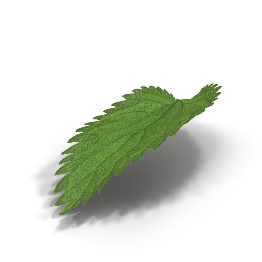Crenate Leaf Modèle 3D royalty-free 3d model - Preview no. 5