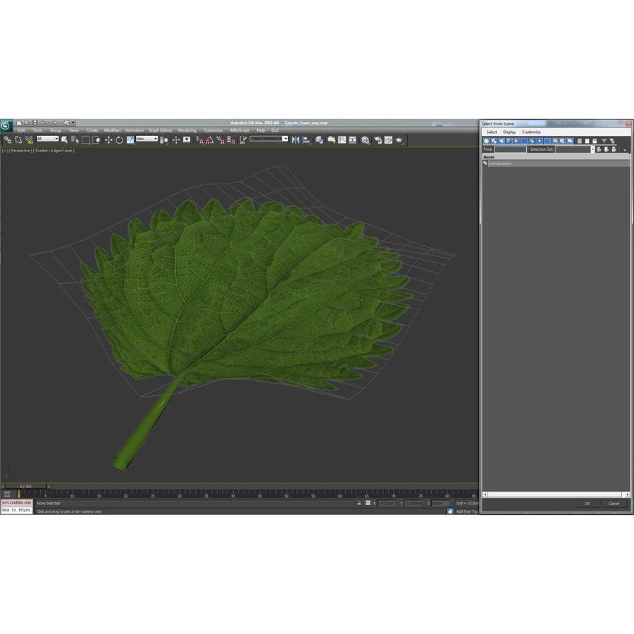Crenate Leaf Modèle 3D royalty-free 3d model - Preview no. 23