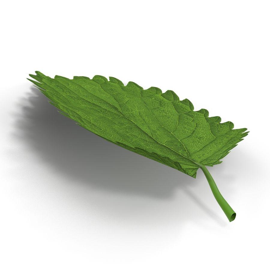 Crenate Leaf Modèle 3D royalty-free 3d model - Preview no. 6