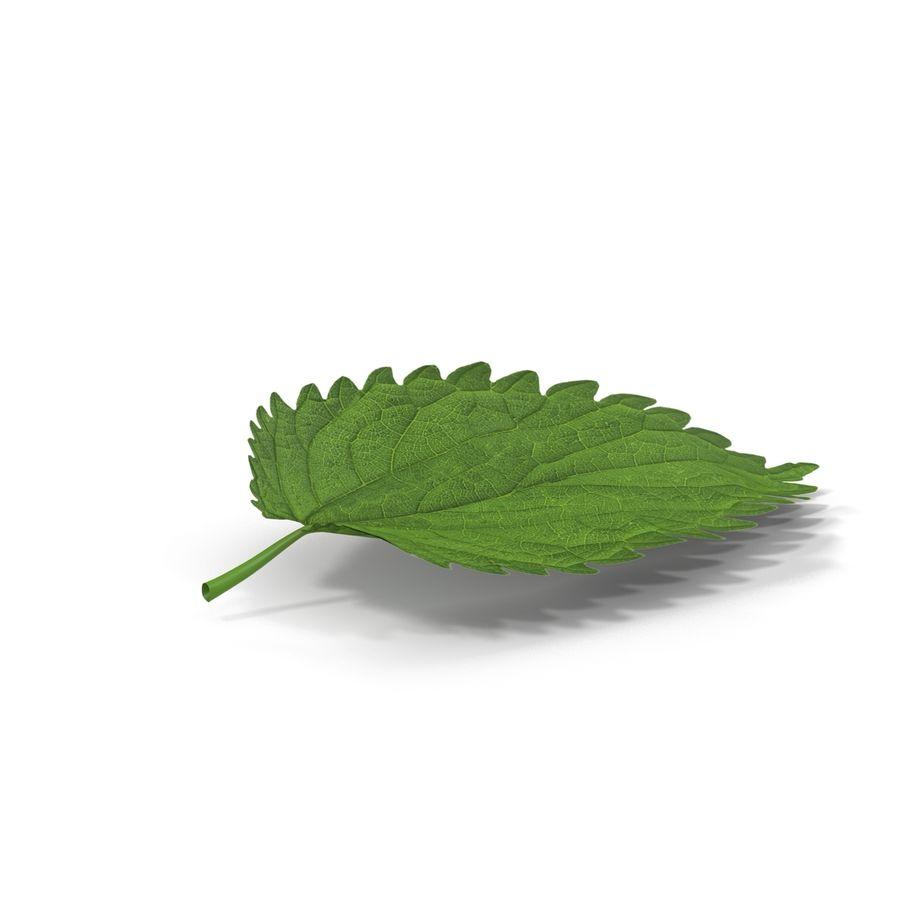 Crenate Leaf Modèle 3D royalty-free 3d model - Preview no. 4
