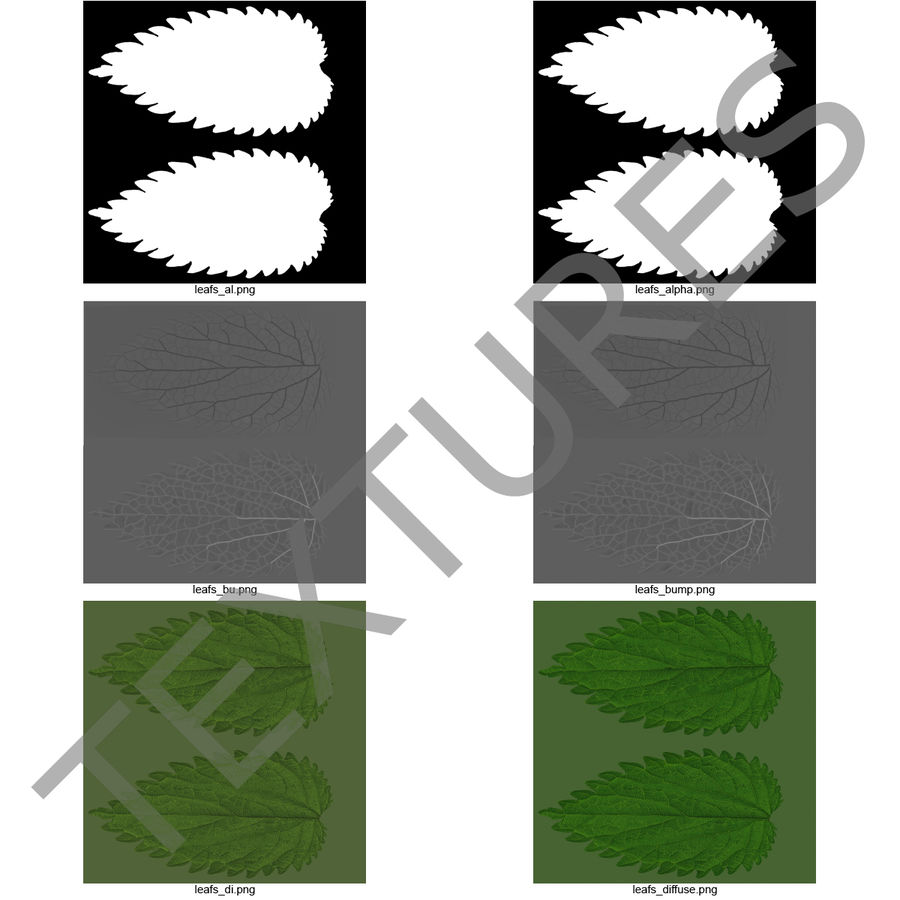 Crenate Leaf Modèle 3D royalty-free 3d model - Preview no. 20