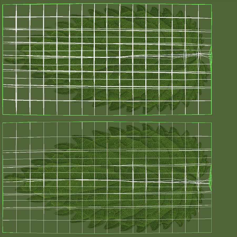 Crenate Leaf Modèle 3D royalty-free 3d model - Preview no. 22