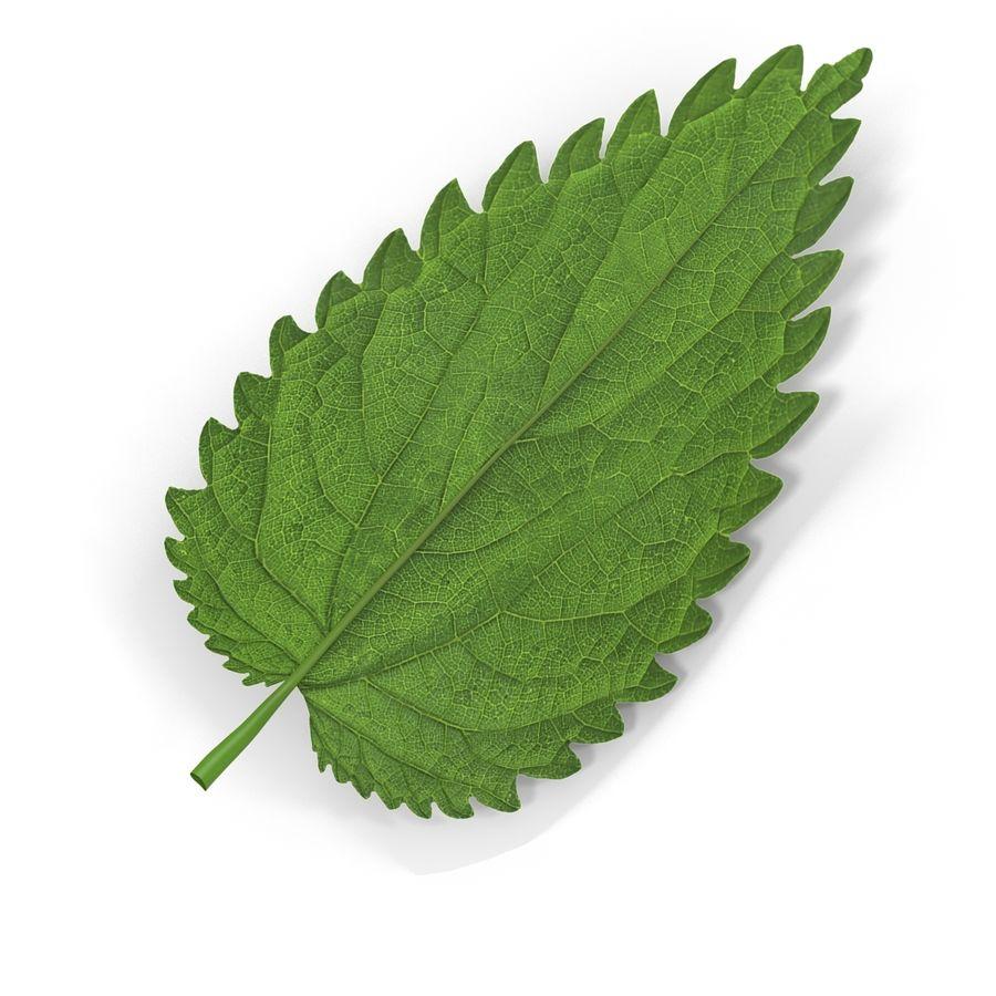 Crenate Leaf Modèle 3D royalty-free 3d model - Preview no. 7