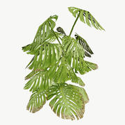 Monstera Type 2 Low Poly 3d model