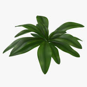 Tropical Plant Glauca Cordyline 3d model
