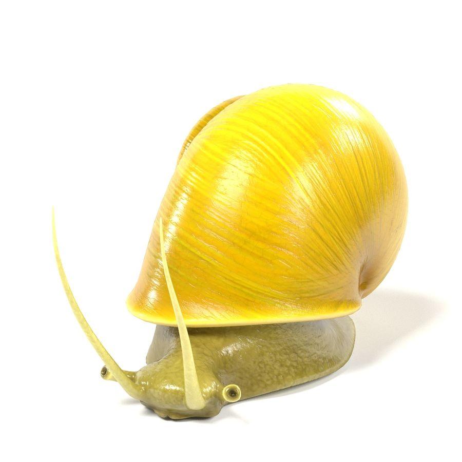 Apple Snail 3d Model 49 Blend Fbx Oth Flt Dae 3ds Free3d