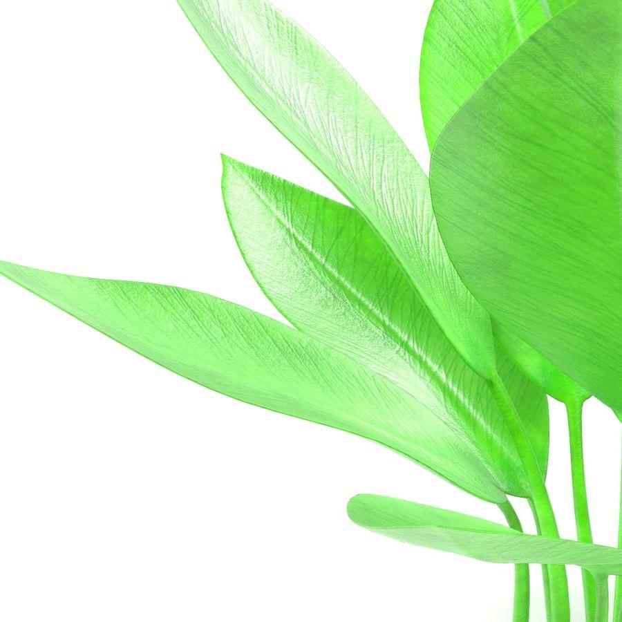 Aquatic Plants royalty-free 3d model - Preview no. 14