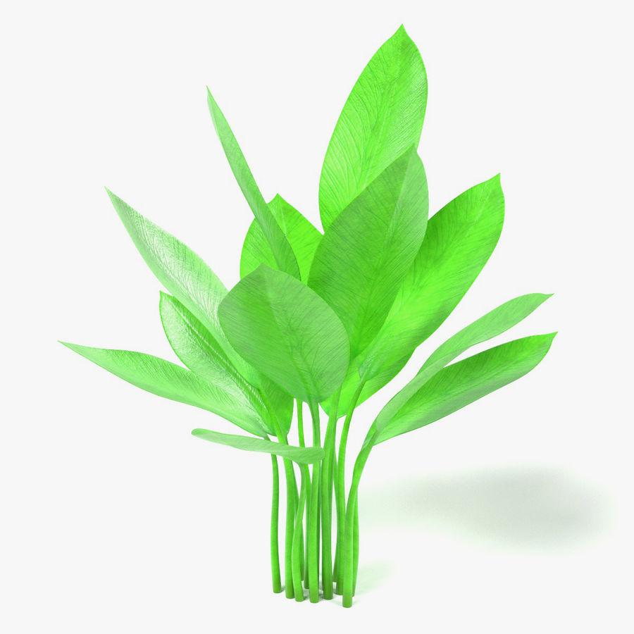 Aquatic Plants royalty-free 3d model - Preview no. 12