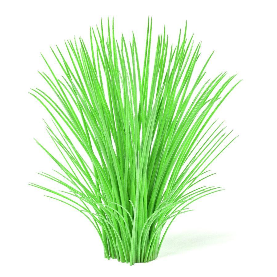 Aquatic Plants royalty-free 3d model - Preview no. 8