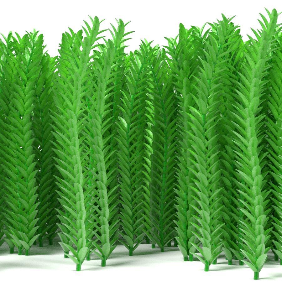 Aquatic Plants royalty-free 3d model - Preview no. 4