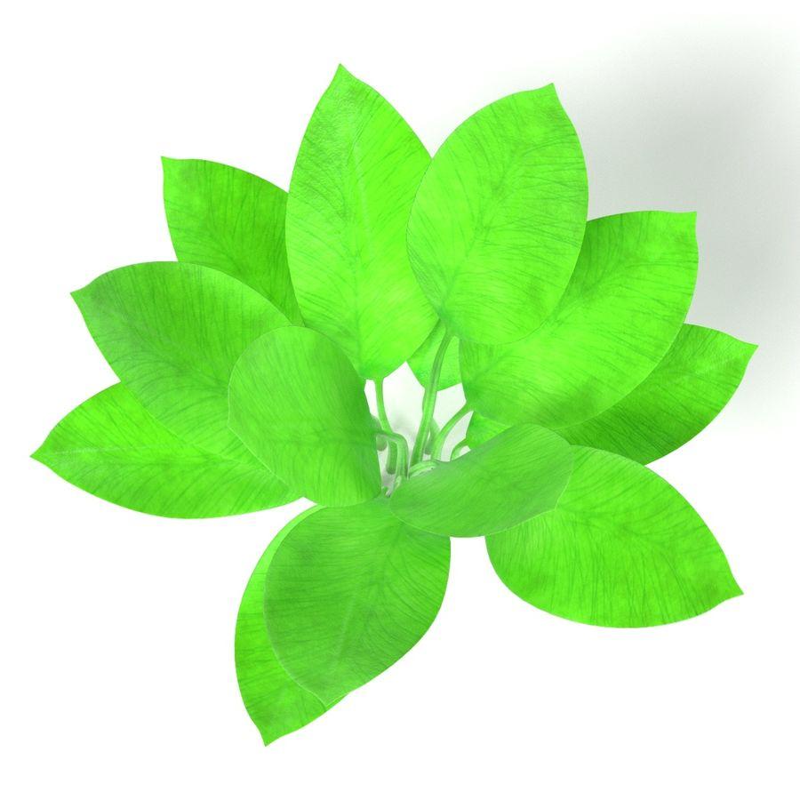 Aquatic Plants royalty-free 3d model - Preview no. 13
