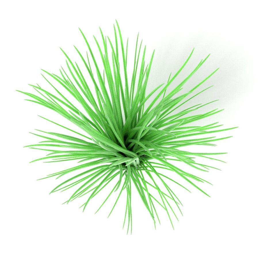 Aquatic Plants royalty-free 3d model - Preview no. 9