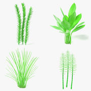 Aquatic Plants 3d model