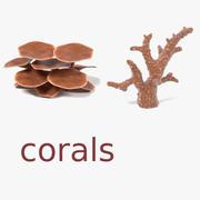 Corals 3d model
