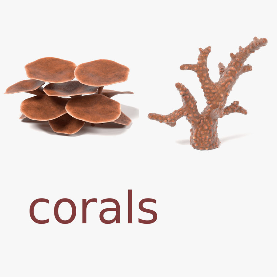 Corals royalty-free 3d model - Preview no. 1