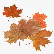Autumn Maple Leaves 3d model