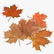 Autumn Maple Leaves 3d model