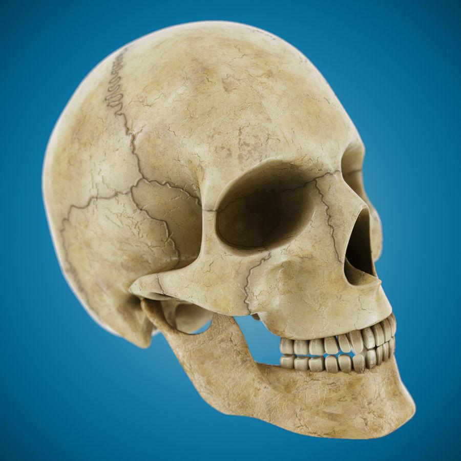 Человеческий череп royalty-free 3d model - Preview no. 2