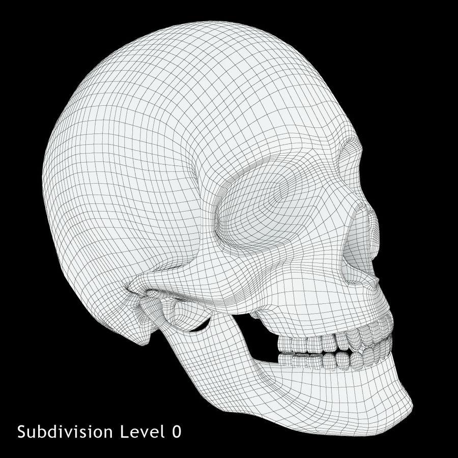 Человеческий череп royalty-free 3d model - Preview no. 8