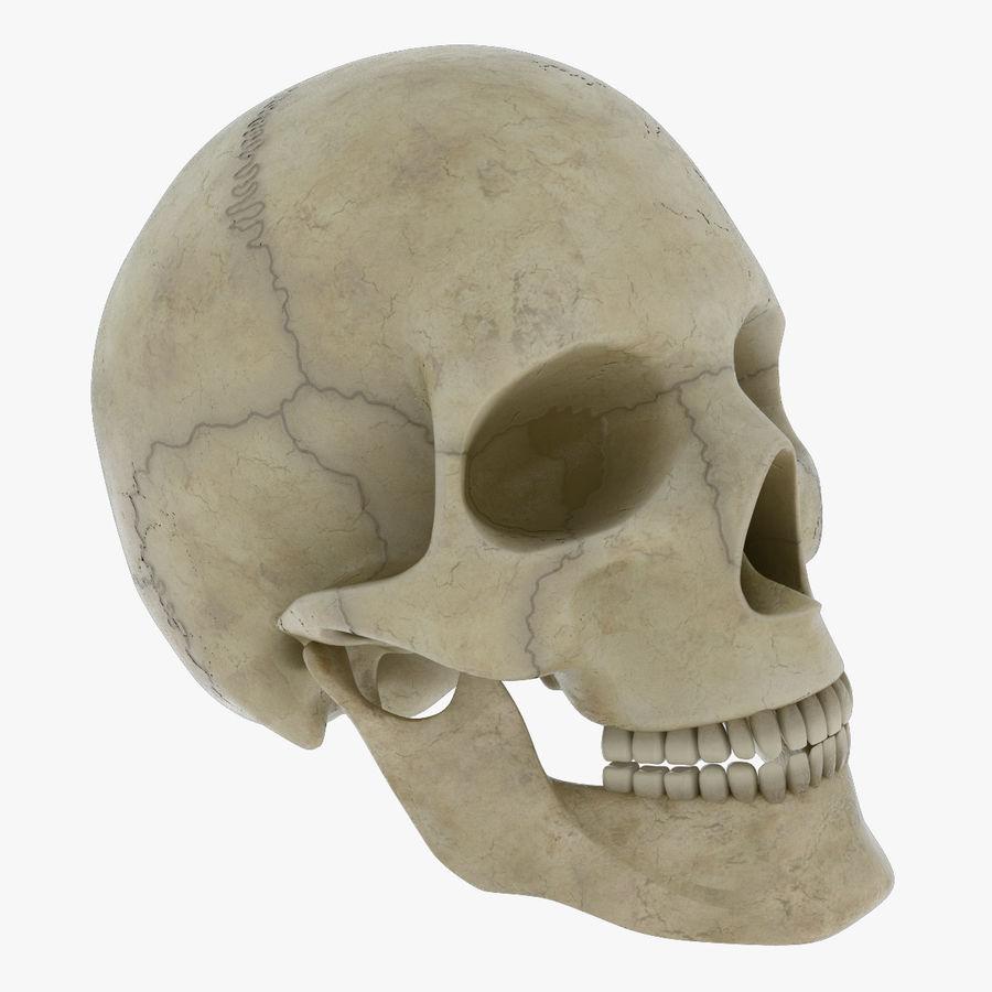 Человеческий череп royalty-free 3d model - Preview no. 1