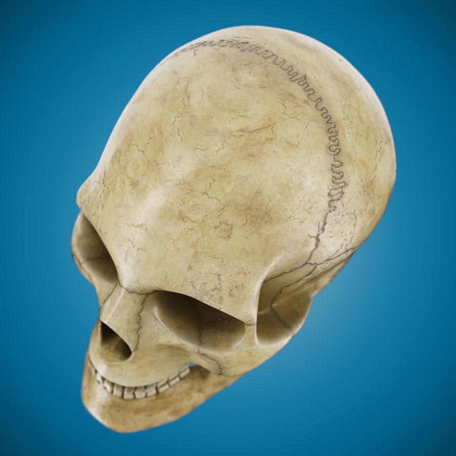 Crâne humain royalty-free 3d model - Preview no. 6
