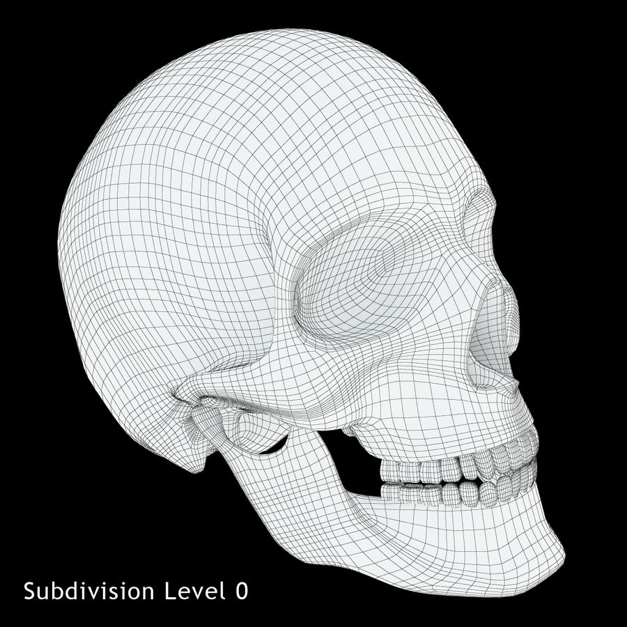Crâne humain royalty-free 3d model - Preview no. 8