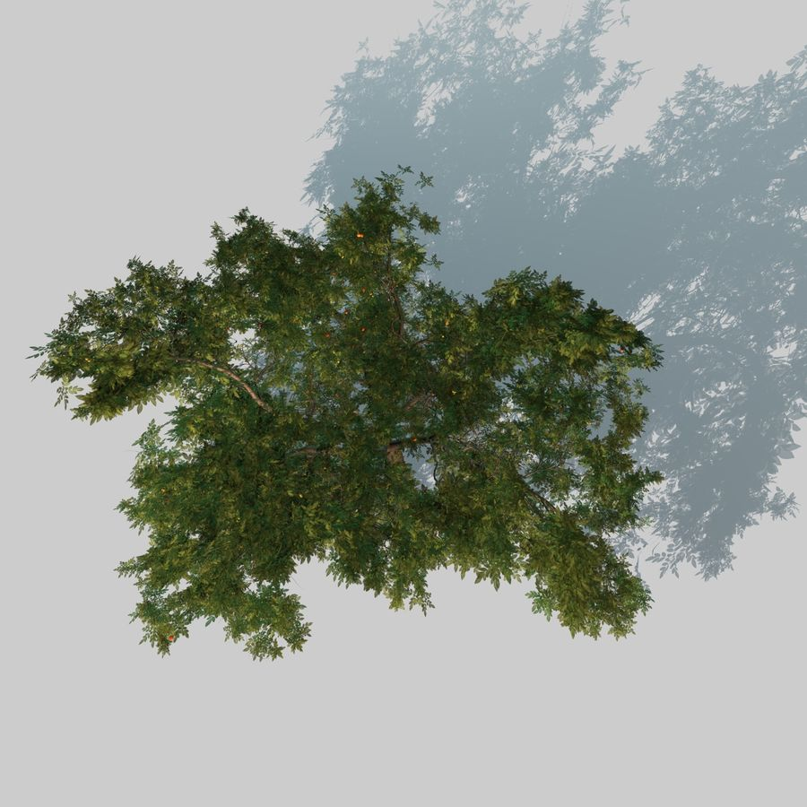 Jabłoń royalty-free 3d model - Preview no. 18
