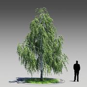 Birch Tree (Betula Pendula) 3d model