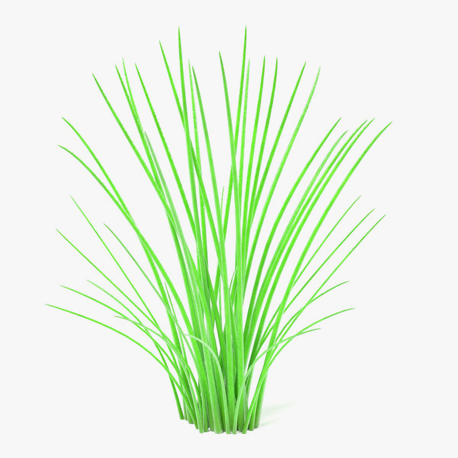 Aquatic Plant2 royalty-free 3d model - Preview no. 1