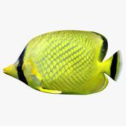 Решетка ButterflyFish 3d model