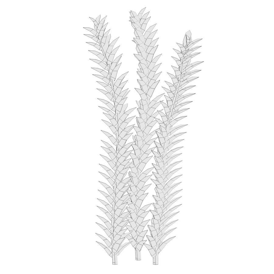 Aquatic Plant1 royalty-free 3d model - Preview no. 4