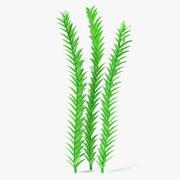 Aquatic Plant1 3d model