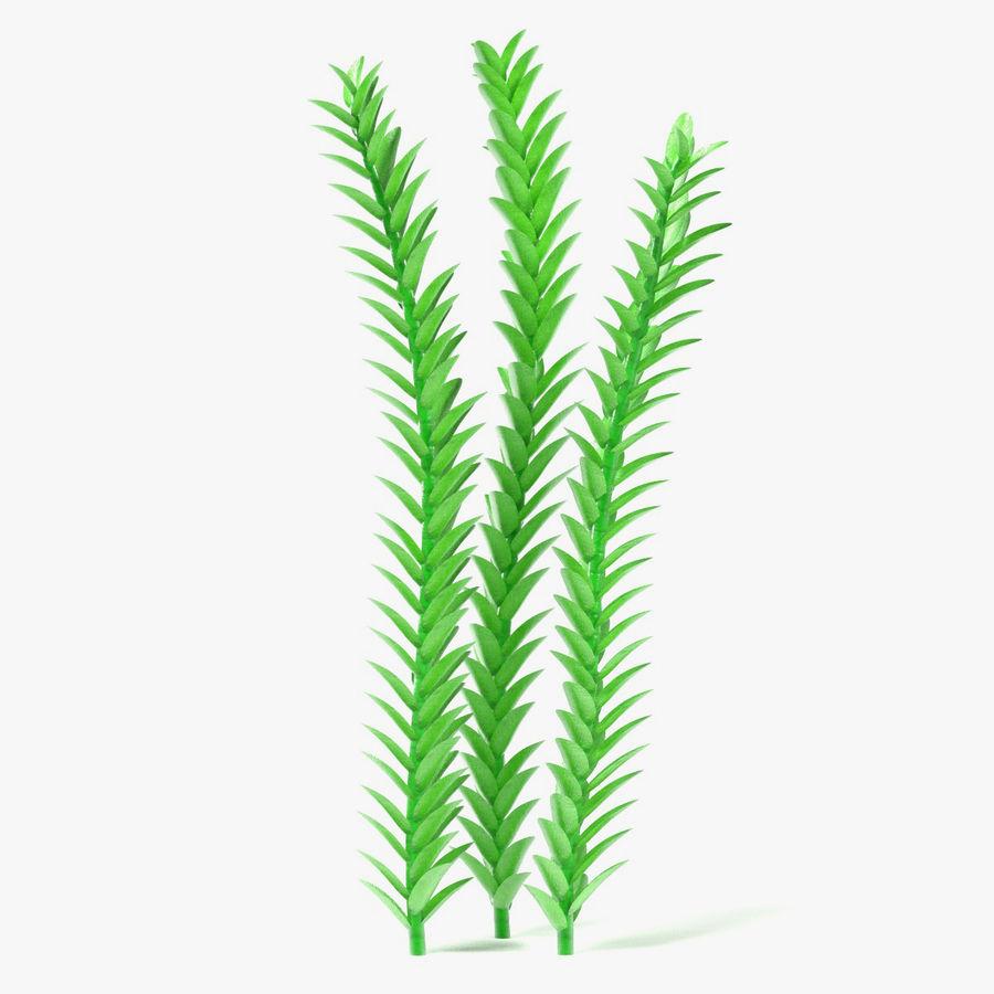 Aquatic Plant1 royalty-free 3d model - Preview no. 1