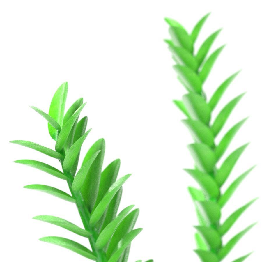 Aquatic Plant1 royalty-free 3d model - Preview no. 2