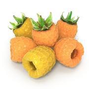 金树莓 3d model