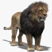 Lejon (1) (päls) 3d model