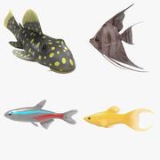 Aquarium fishes 3d model