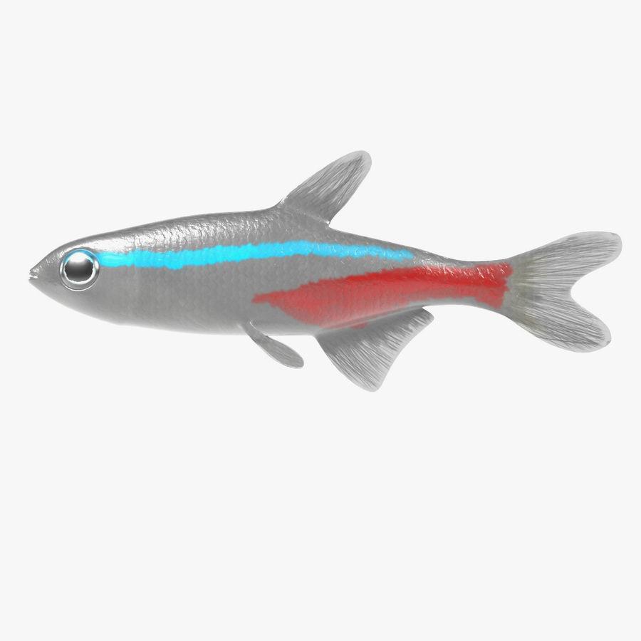 Peces de acuario royalty-free modelo 3d - Preview no. 8