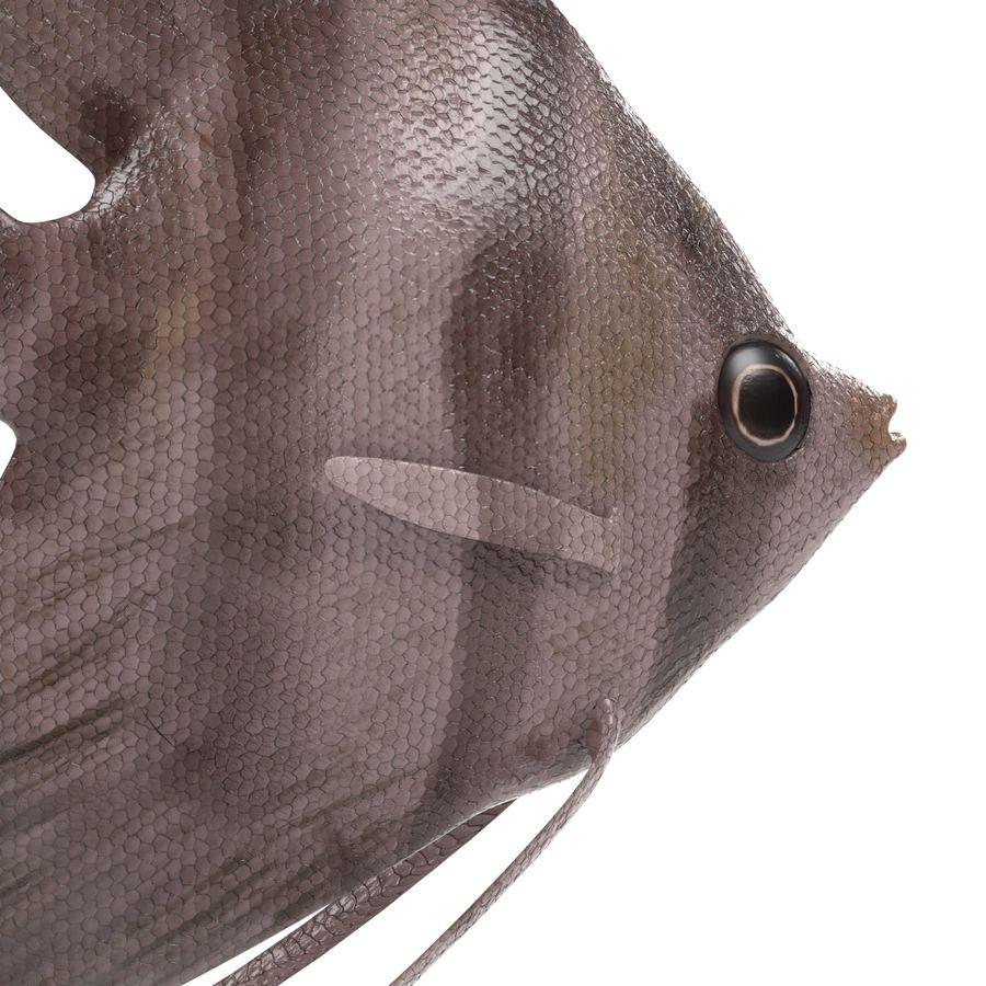 Peces de acuario royalty-free modelo 3d - Preview no. 20