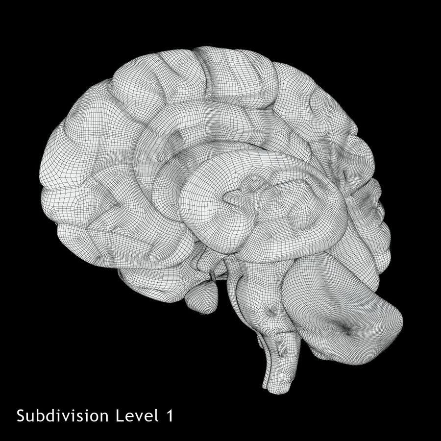 Anatomy Human Brain royalty-free 3d model - Preview no. 16