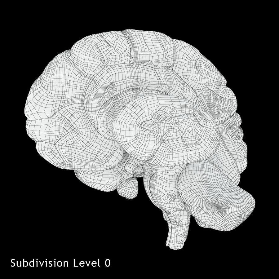 Anatomy Human Brain royalty-free 3d model - Preview no. 15