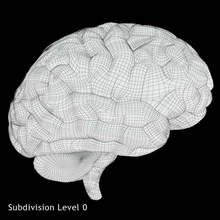 Anatomy Human Brain royalty-free 3d model - Preview no. 11