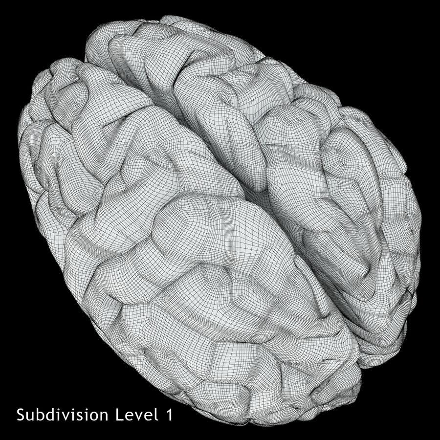 Anatomy Human Brain royalty-free 3d model - Preview no. 20